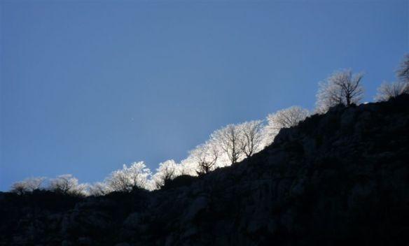 Contraluz de árboles por Julio Aedo