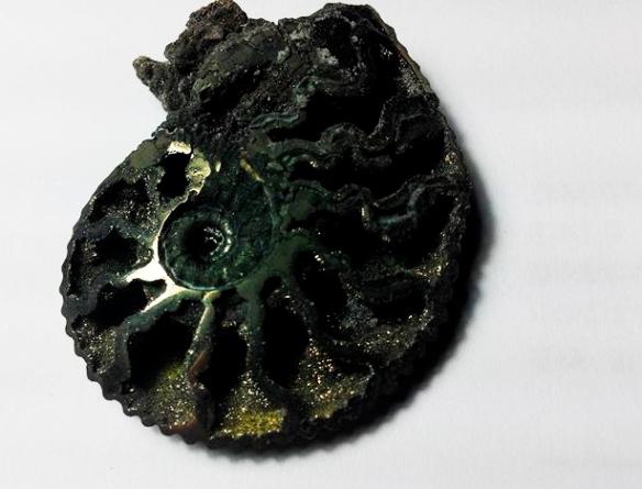"""""""Un ammonites piritizado fuera de lo común"""" por Julio Aedo"""