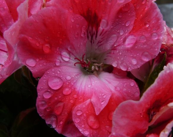 """""""Llueve sobre mojado"""" por Julio Aedo"""